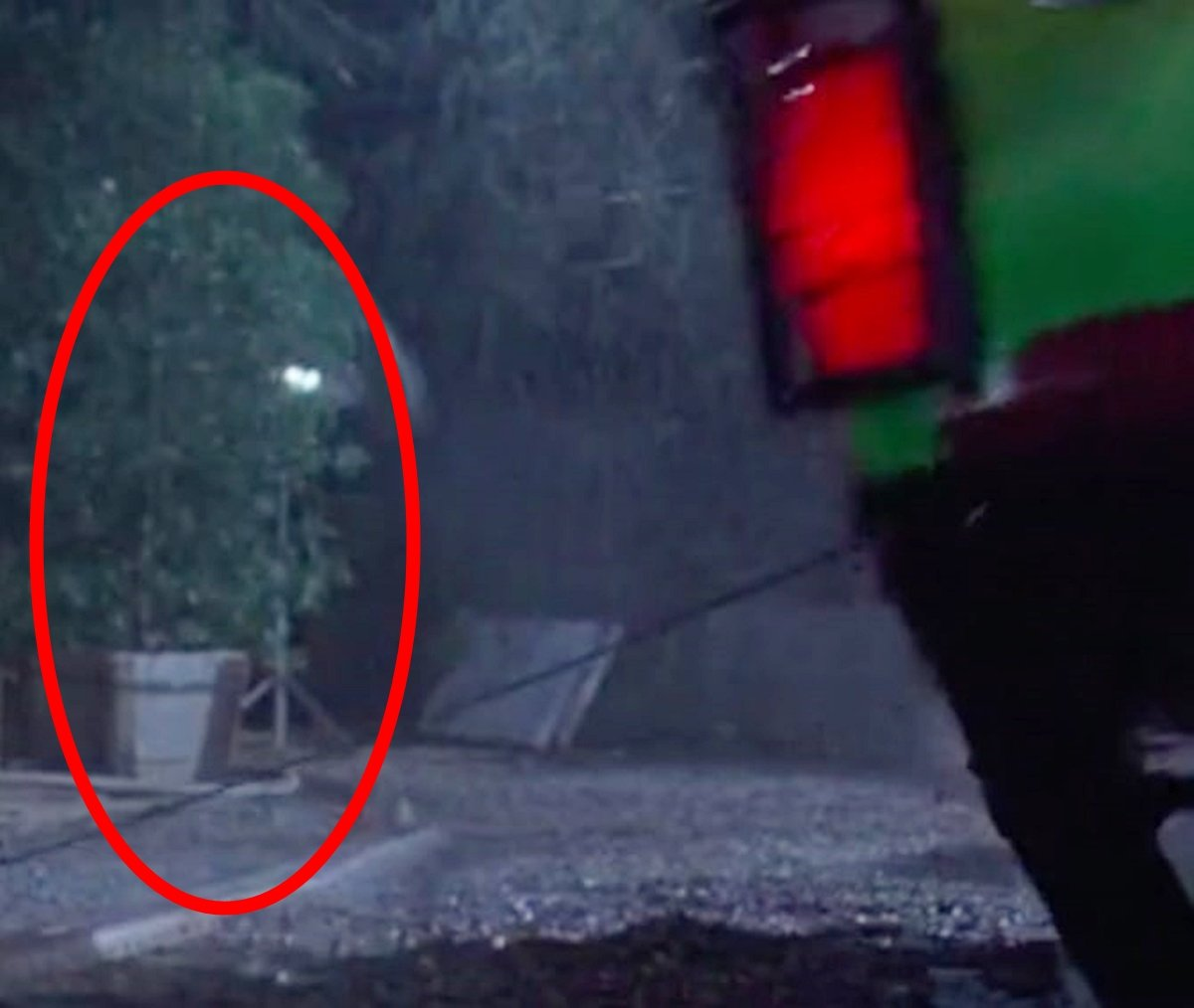 PLANT 25 Things You Probably Missed In Jurassic Park