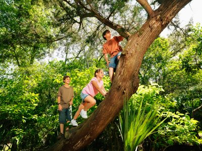 tree climbing 10 Things We Used To Do In The School Holidays