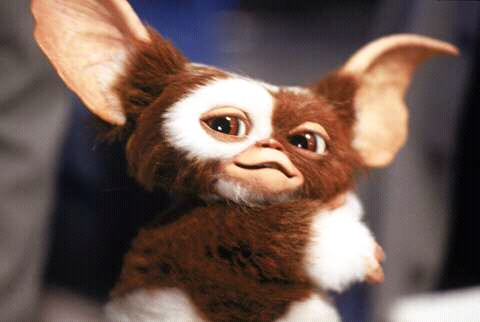 FB IMG 15265758328942608 15 Incredible Facts About Gremlins