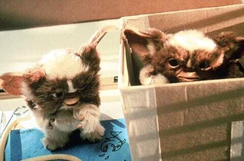 FB IMG 15265762177636896 15 Incredible Facts About Gremlins