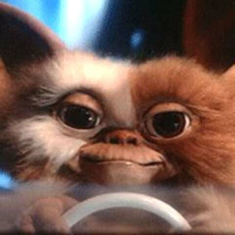 FB IMG 15265845240926264 15 Incredible Facts About Gremlins