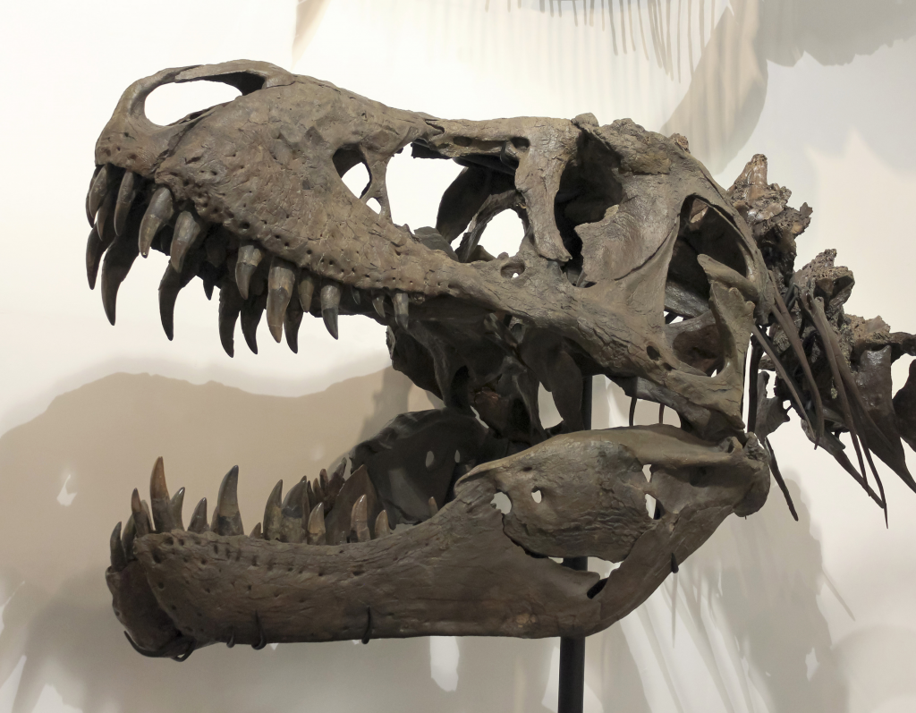 t rex 20 Fascinating Facts You Didn't Know About Nicolas Cage
