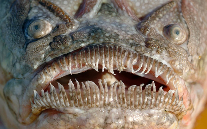 2. 18 Scientists Share Terrifying Pictures Of 16,000 ft Deep Sea Creatures. We Wish They Hadn't