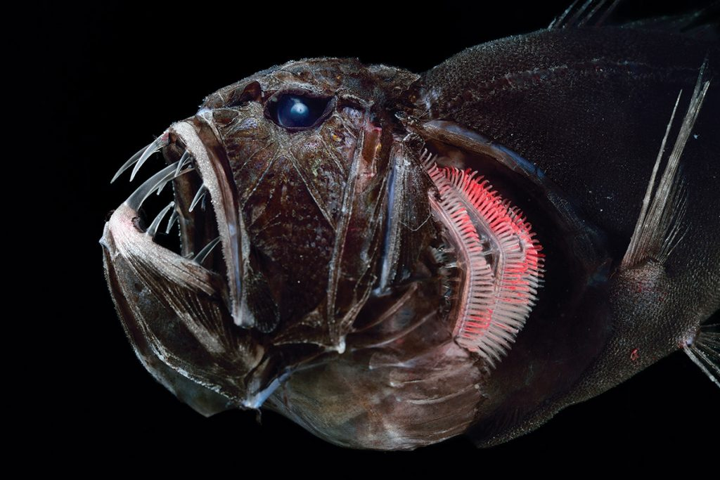 5. 14 Scientists Share Terrifying Pictures Of 16,000 ft Deep Sea Creatures. We Wish They Hadn't