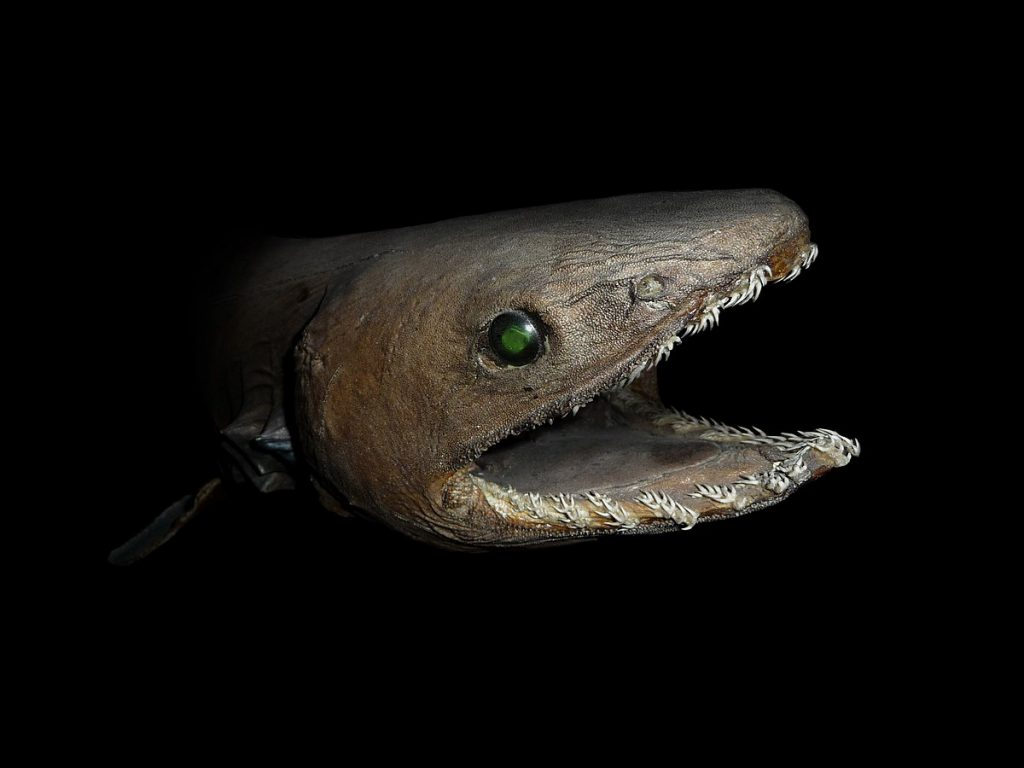 6. 12 Scientists Share Terrifying Pictures Of 16,000 ft Deep Sea Creatures. We Wish They Hadn't