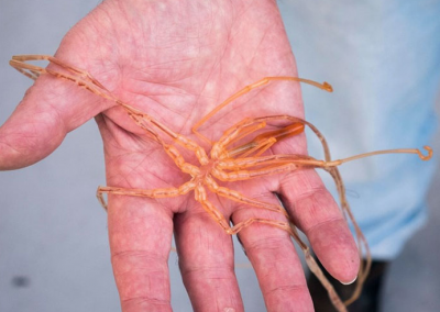 Screen Shot 2018 06 13 at 13.06.14 Scientists Share Terrifying Pictures Of 16,000 ft Deep Sea Creatures. We Wish They Hadn't