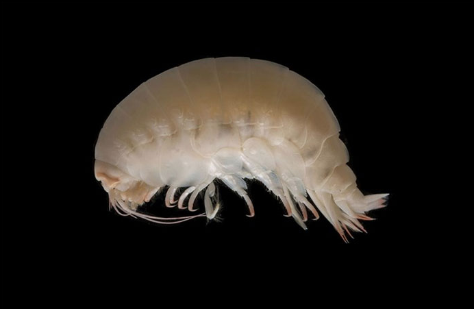Screen Shot 2018 06 21 at 10.19.53 Scientists Share Terrifying Pictures Of 16,000 ft Deep Sea Creatures. We Wish They Hadn't