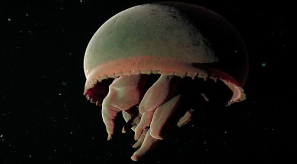 Screen Shot 2018 06 21 at 11.36.52 Scientists Share Terrifying Pictures Of 16,000 ft Deep Sea Creatures. We Wish They Hadn't