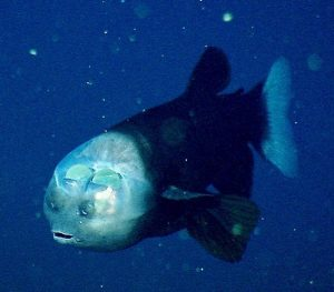 barrel Scientists Share Terrifying Pictures Of 16,000 ft Deep Sea Creatures. We Wish They Hadn't