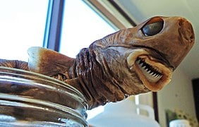 cookie Scientists Share Terrifying Pictures Of 16,000 ft Deep Sea Creatures. We Wish They Hadn't