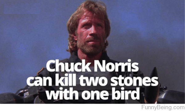 Birds 14 Of The Best Chuck Norris Memes To Make You Smile - Which Is Your Favourite?