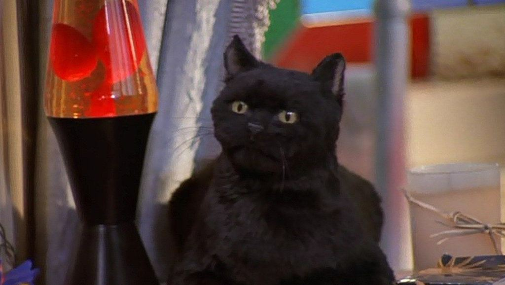 Sabrina Teenage Witch Salem GIFs 8 Things You Didn't Know About Sabrina the Teenage Witch