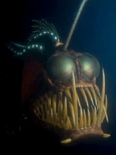 Screen Shot 2018 10 10 at 10.26.30 30 Things You Didn't Know About Finding Nemo