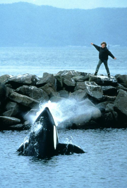The famous Free Willy finale