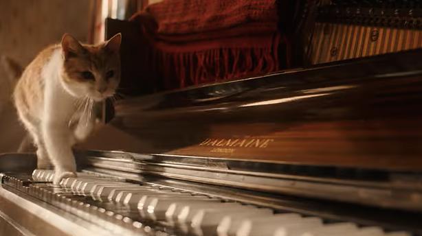 cat bohemian rhapsody 25 Things You Need To Know About Bohemian Rhapsody