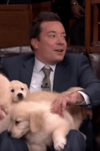 Screenshot 2019 02 20 at 09.56.40 21 Things You Didn't Know About Jimmy Fallon