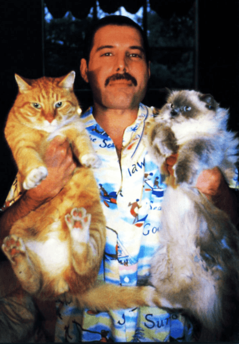 Screenshot 2019 02 26 at 10.09.33 20+ Photos Of Freddie Mercury And His Beloved Cats