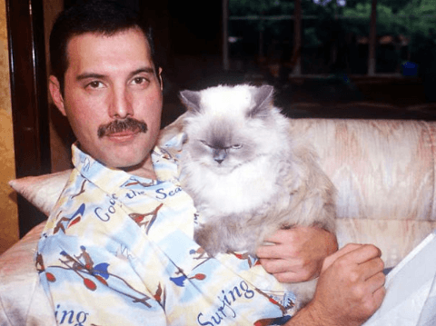 Screenshot 2019 02 26 at 10.09.45 20+ Photos Of Freddie Mercury And His Beloved Cats
