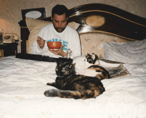 Screenshot 2019 02 26 at 10.11.00 20+ Photos Of Freddie Mercury And His Beloved Cats