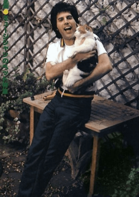 Screenshot 2019 02 26 at 10.11.07 1 20+ Photos Of Freddie Mercury And His Beloved Cats