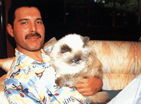 Screenshot 2019 02 26 at 10.11.24 20+ Photos Of Freddie Mercury And His Beloved Cats