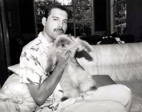 Screenshot 2019 02 26 at 10.11.55 20+ Photos Of Freddie Mercury And His Beloved Cats
