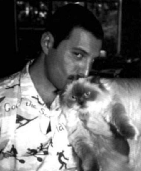 Screenshot 2019 02 26 at 10.12.02 20+ Photos Of Freddie Mercury And His Beloved Cats