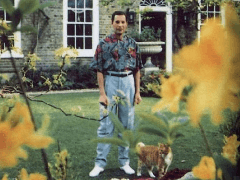 Screenshot 2019 02 26 at 10.12.22 20+ Photos Of Freddie Mercury And His Beloved Cats