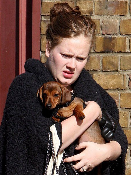 adele with dog 1328786237 view 1 21 Things You Never Knew About Adele