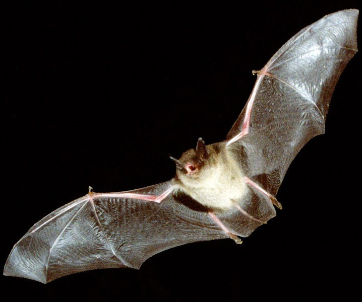 A vampire bat came flapping in 25 Things You Didn't Know About Buffy The Vampire Slayer