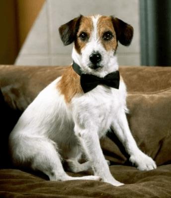 Moose as Eddie the dog in Frasier