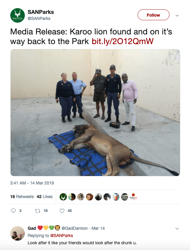 Screenshot 2019 03 20 at 14.58.17 A Lion In South Africa Has Been Arrested And Sent To Jail After Escaping From The Zoo