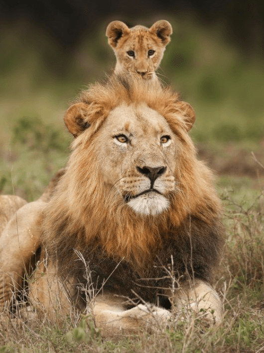 Screenshot 2019 03 27 at 08.52.46 21 Things You Didn't Know About The Lion King