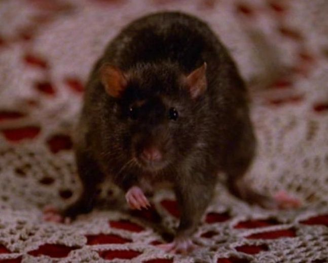 rat 25 Things You Didn't Know About Buffy The Vampire Slayer