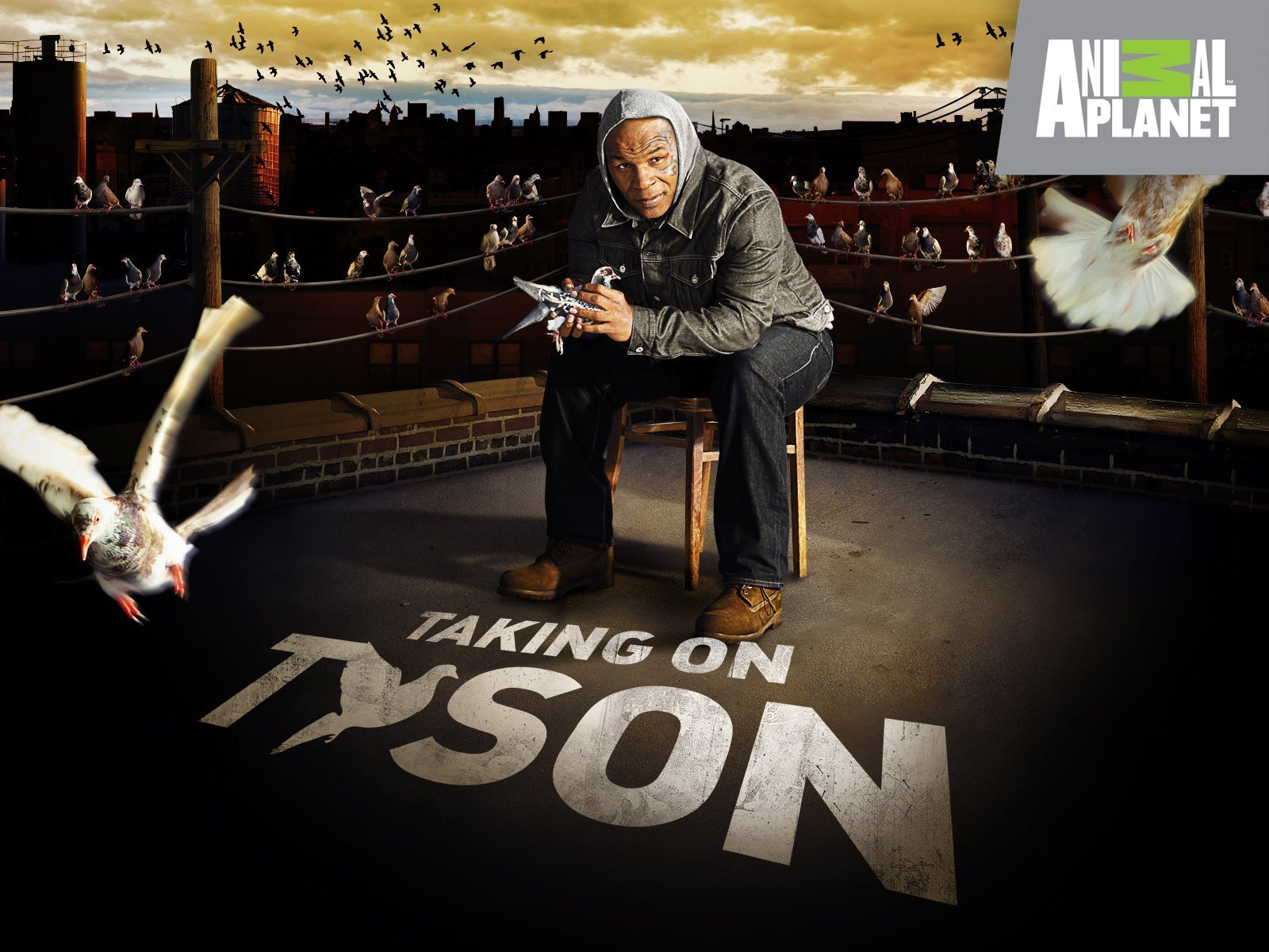817Tcpr5GYL. RI 25 Things You Never Knew About Iron Mike Tyson