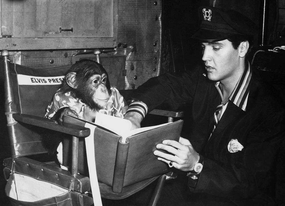 Elvis presley and Scatter 2 10 Things You Didn't Know About Elvis Presley