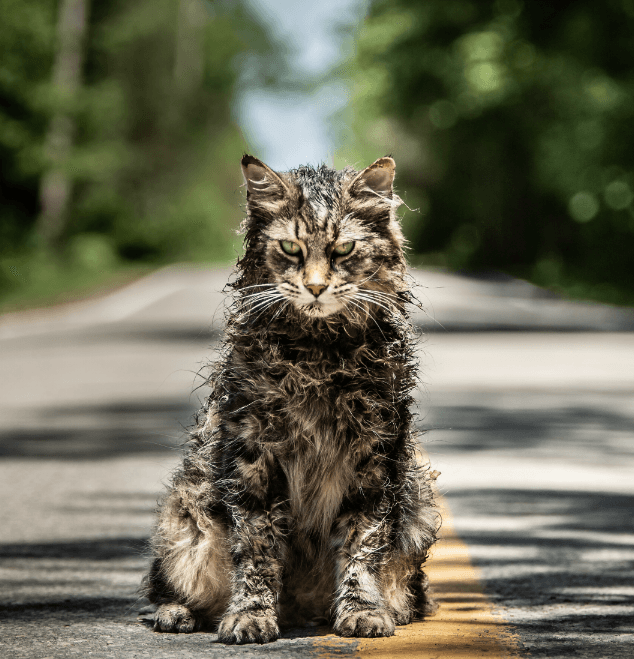 Pet Sematary 2 10 Things You Didn't Know About Pet Sematary (2019)