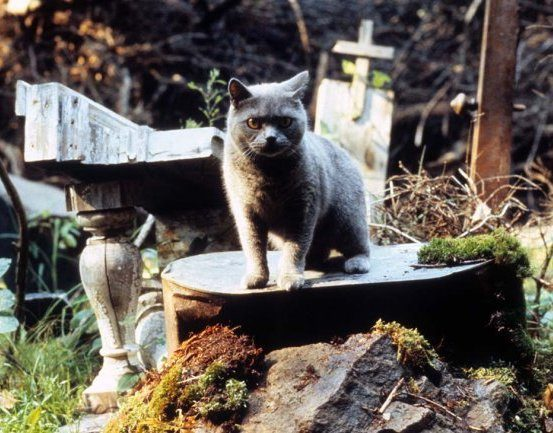 pet sematary 89 a h 2019 10 Things You Never Knew About 1989's Pet Sematary