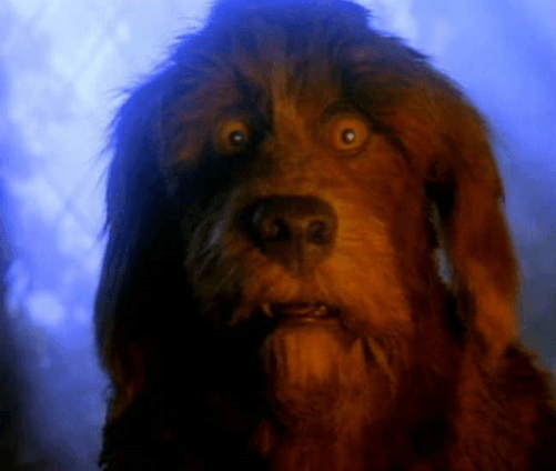10dog 12 Incredible Facts You Never Knew About Jim Henson's The Storyteller!