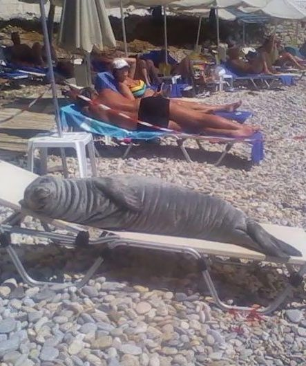 beach 1 e1560240716621 20 Beach Snapshots That Will Make You Doubt Your Seaside Holiday