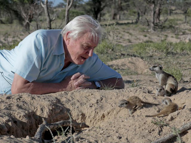 gen7 70 Years In The Field: Everything You Never Knew About Sir David Attenborough
