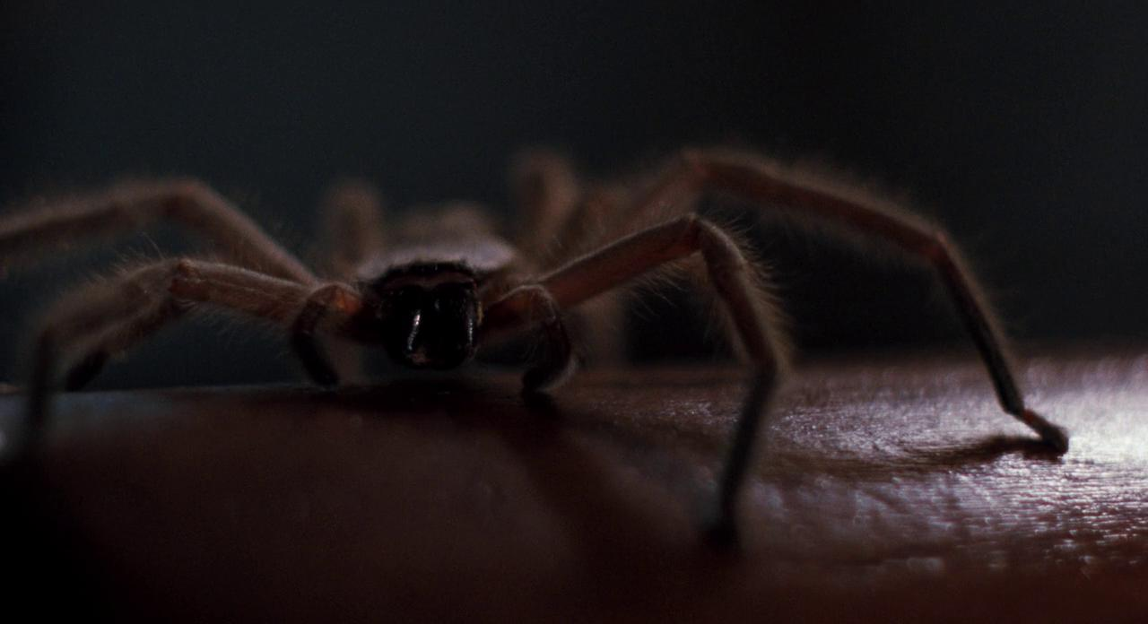 12 27 These 20 Creepy Facts About Disney's Arachnophobia Definitely Have Legs