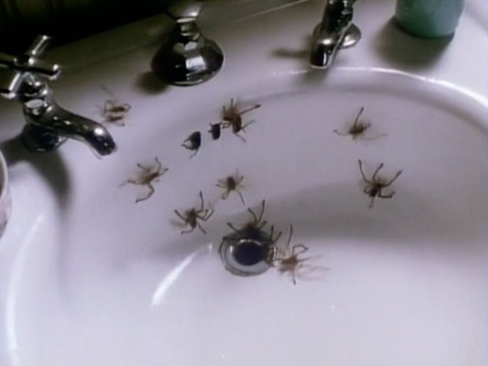 2 51 e1616670149645 These 20 Creepy Facts About Disney's Arachnophobia Definitely Have Legs