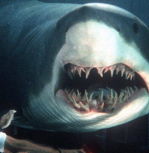 3Studio 10 Facts You Probably Didn't Know About Deep Blue Sea