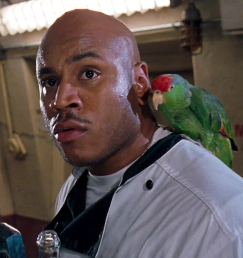 7Parrot 10 Facts You Probably Didn't Know About Deep Blue Sea
