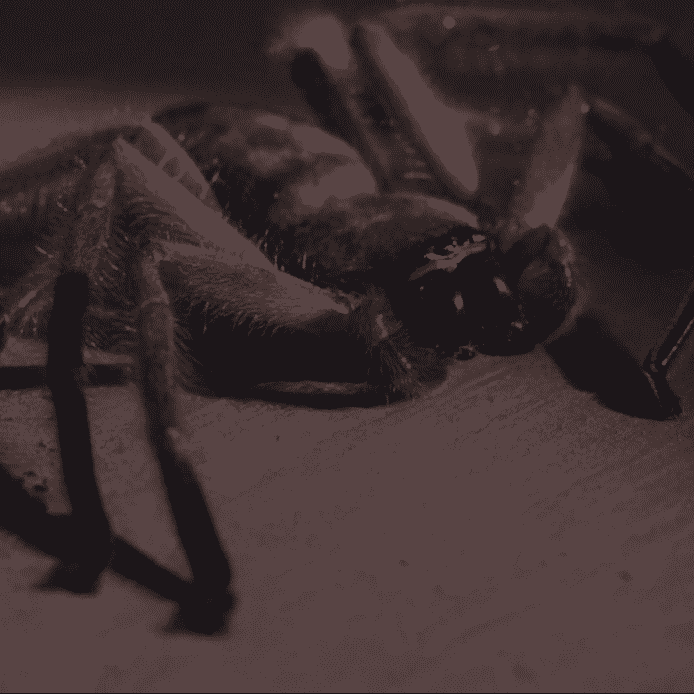 Spider Arachnophobia e1572610504944 These 20 Creepy Facts About Disney's Arachnophobia Definitely Have Legs