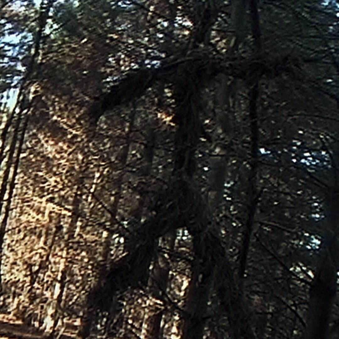 blairwitch1 e1572002689394 The Blair Witch Project: 20 Behind-The-Scenes Nuggets That Made It The Most Successful Film Ever