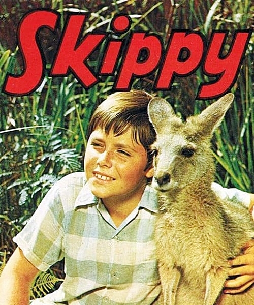 2 25 8 Animal Based TV Shows We Loved Watching As Kids