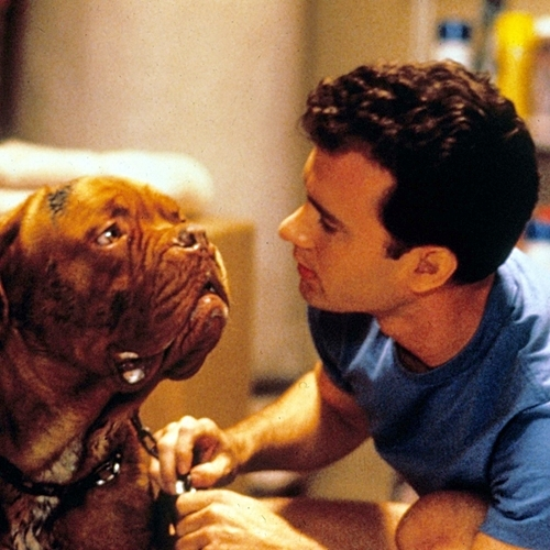 4 39 10 Things You Never Knew About Turner & Hooch