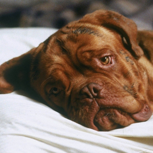 8 35 10 Things You Never Knew About Turner & Hooch